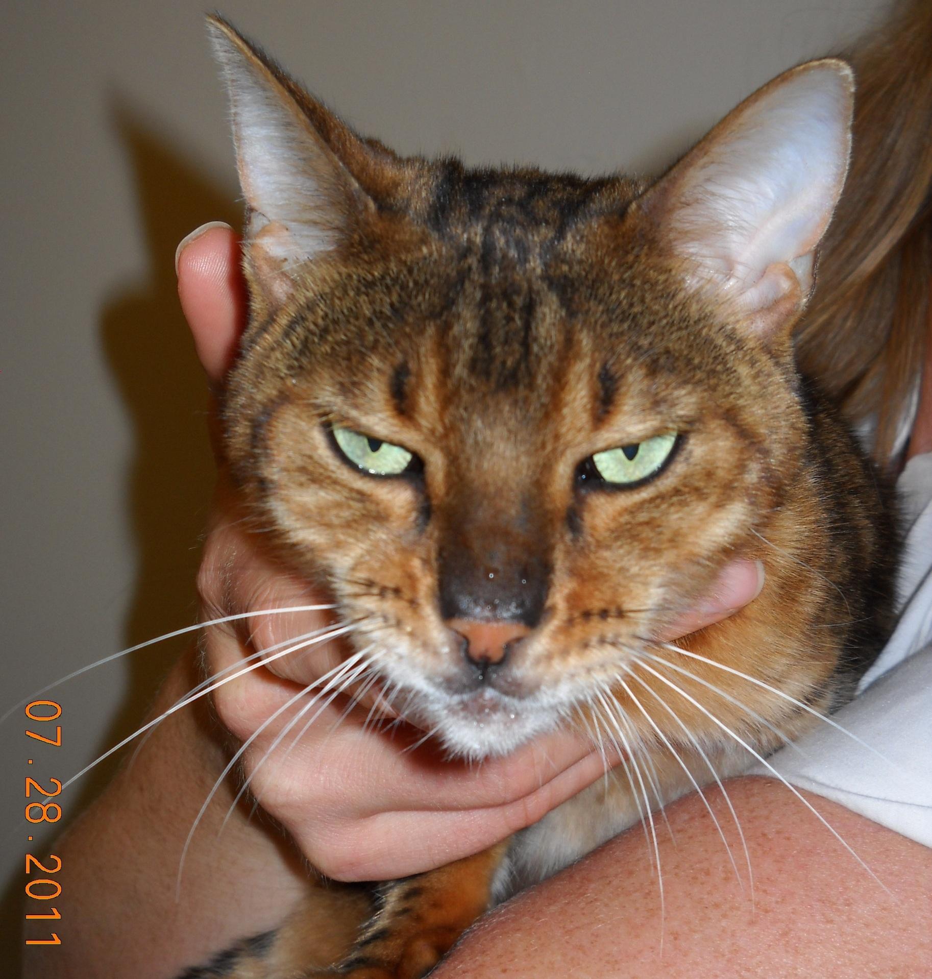 frankie muniz cat