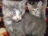 2012Laverne & Shirley
