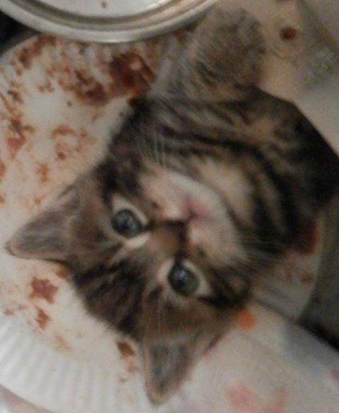 Behavior Modification Community Concern For Cats