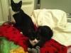 2012Sox&Cleo