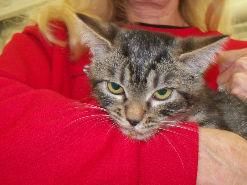 My New Cat Rescue Lafayette In