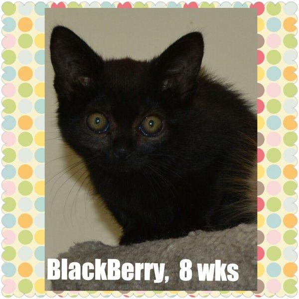 2015Blackberry