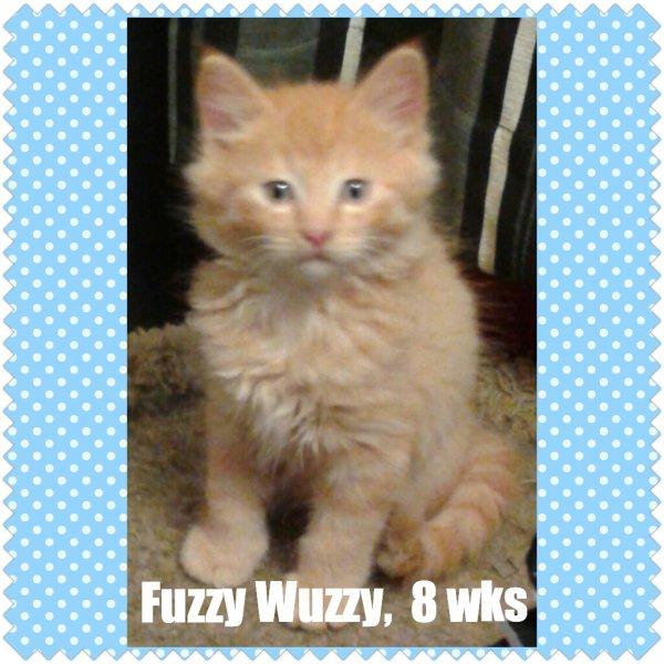2015FuzzyWuzzy