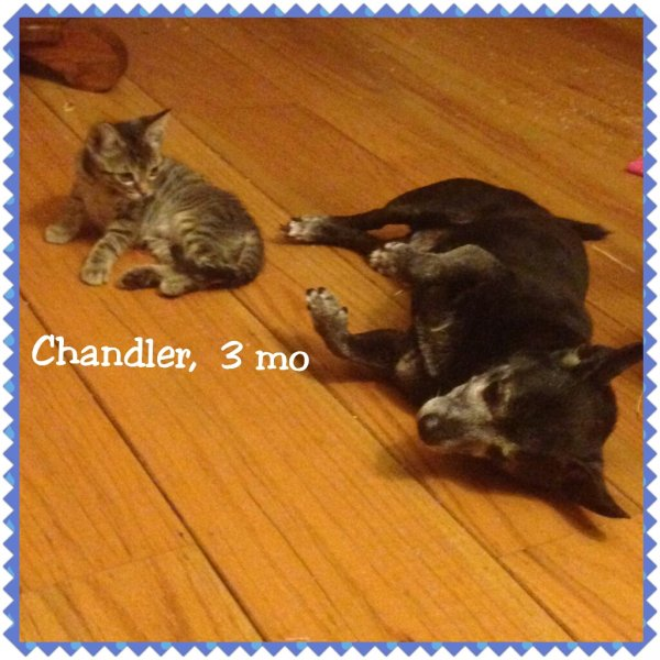 2015Chandler