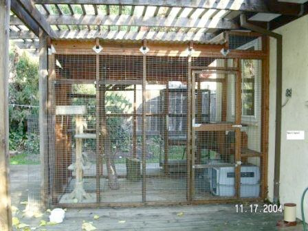 Enclosures For Cats Community Concern For Cats