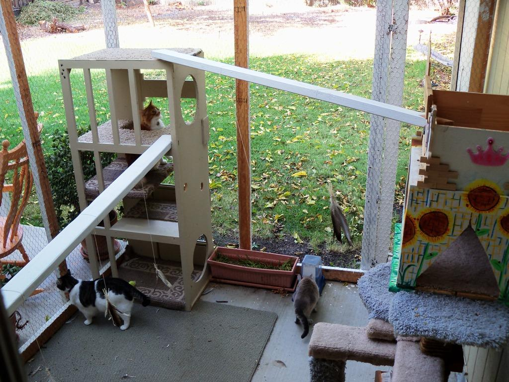 Enclosures for cats community concern for cats for Exterior enclosure