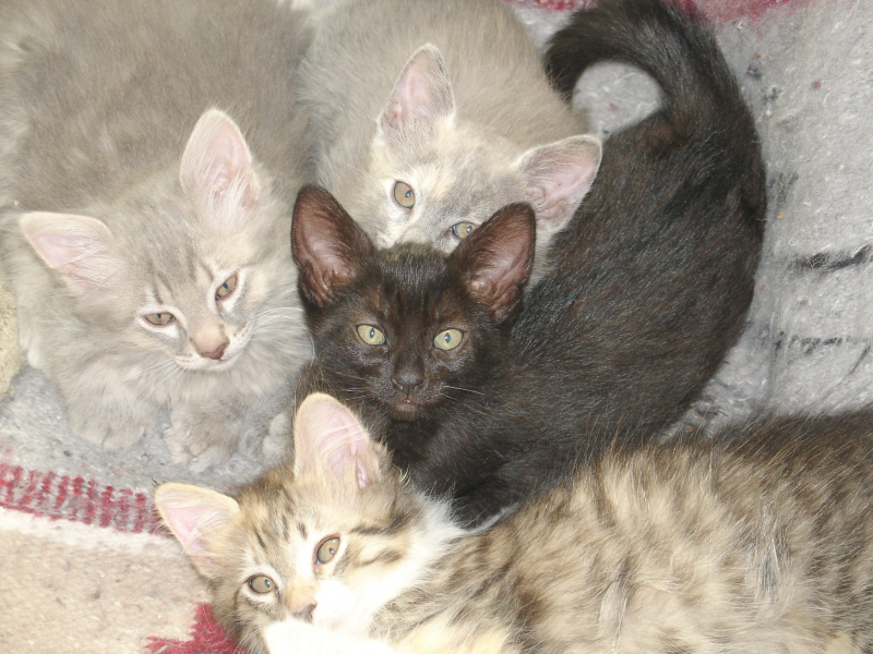 mamas-kittens