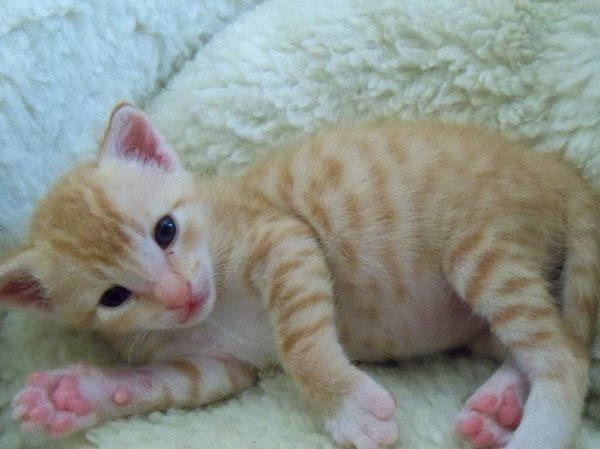 how to make a newborn kitten love you