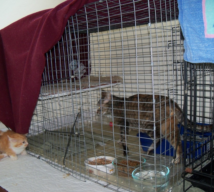 Recovery Cage