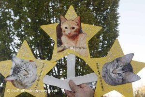 Copyright Lori A Cheung, the Pet Photographer