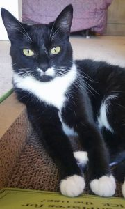 Chanel Cat up for adoption