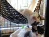 2012sweetie-pie-in-hammock-2