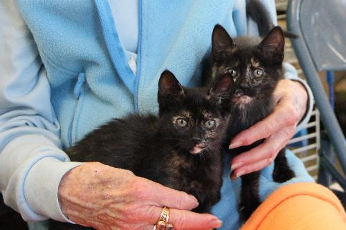 2012tortie-kittens