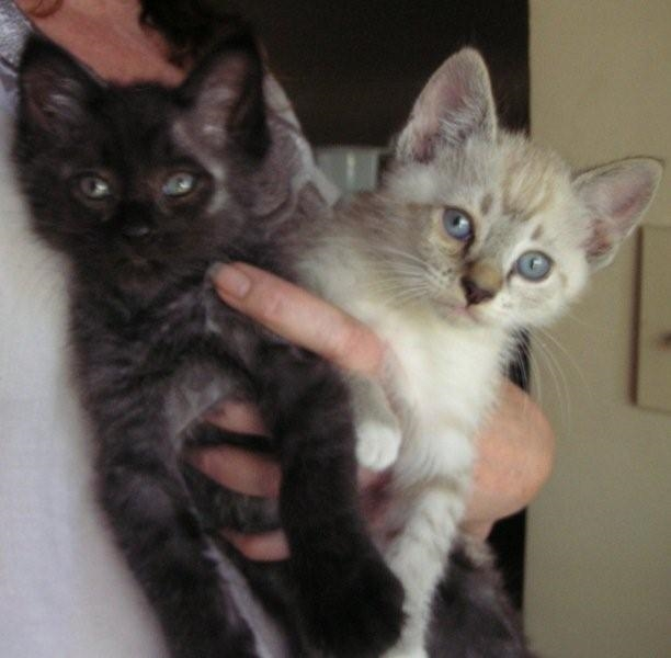 2013detroit-kitties