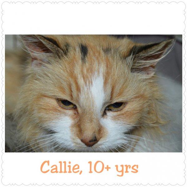 2015Callie
