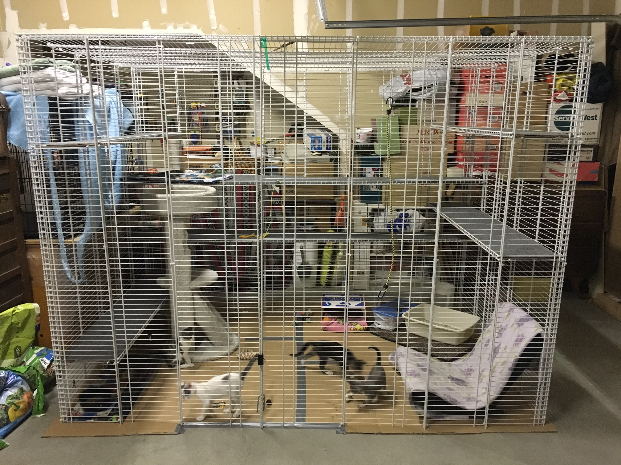 Enclosures For Cats Community Concern Exterior Wiring Safe Inexpensive Cat Enclosure