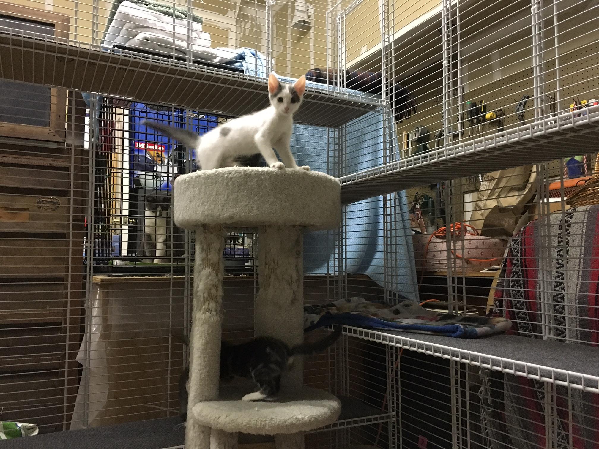 Safe Inexpensive Cat Enclosure