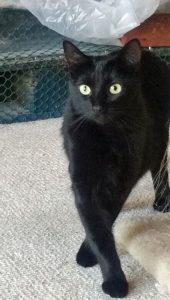 Coco Cat Up for Adoption