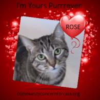 CC4C Valentines Day Cats