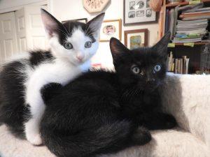 Black Cat Friday Sale