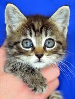 Community Concern for Cats Fundraisers