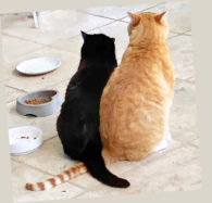 Community Concern for Cats' PHOTO CONTEST WINNERS Story