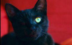 CC4C Cat Photo Contest